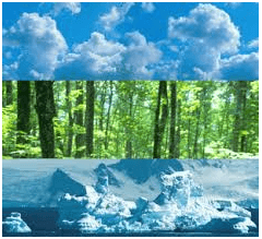 Environmental Inspection
