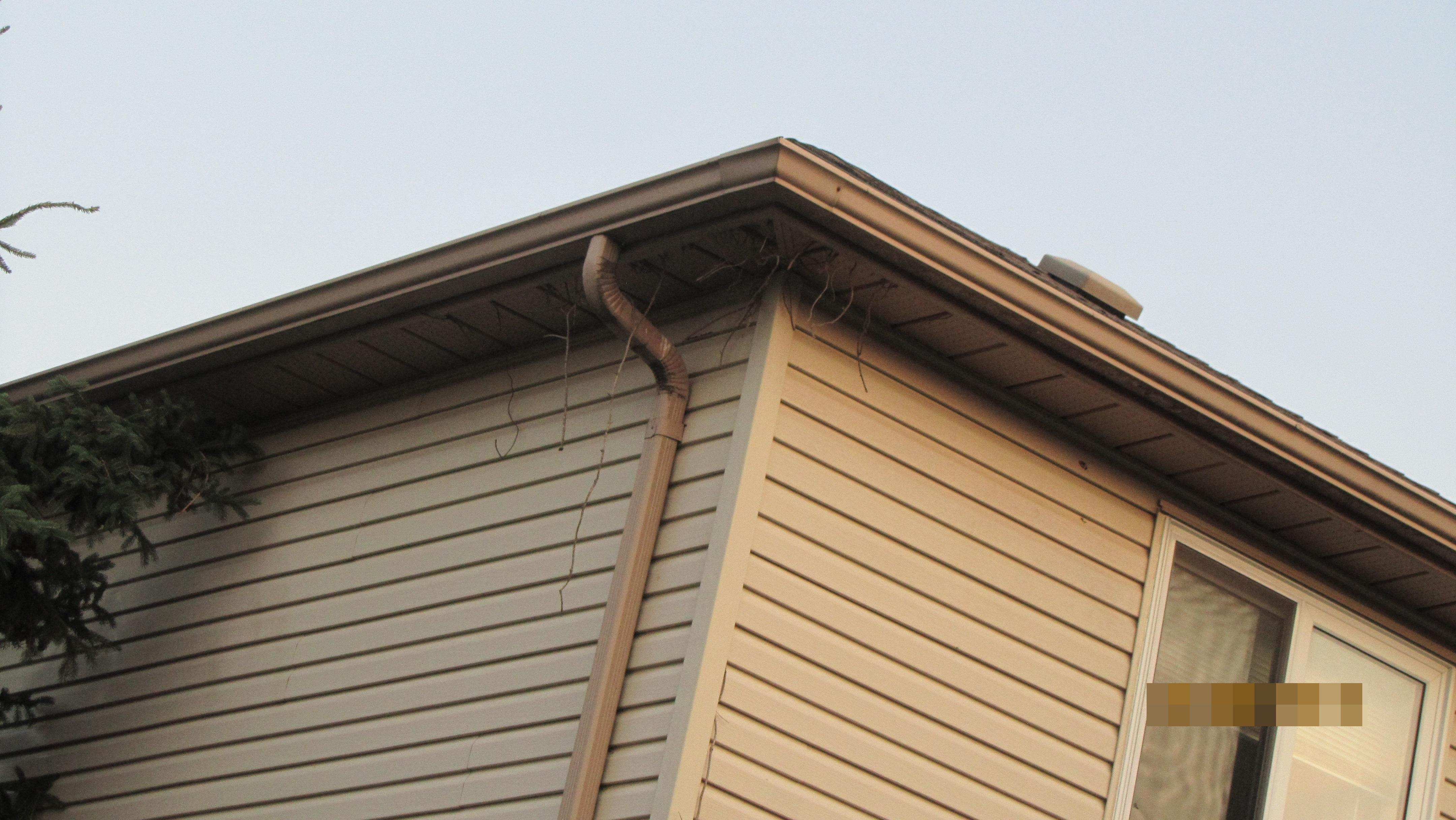 Tree branches coming through Attic
